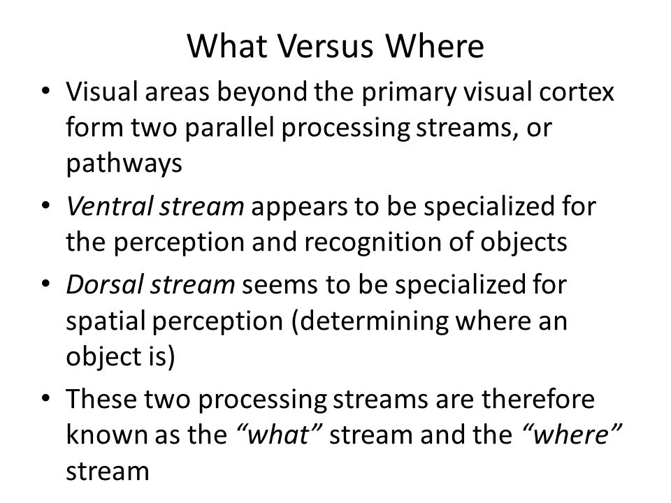 What Versus Where Visual areas beyond the primary visual cortex form two parallel processing streams, or pathways.