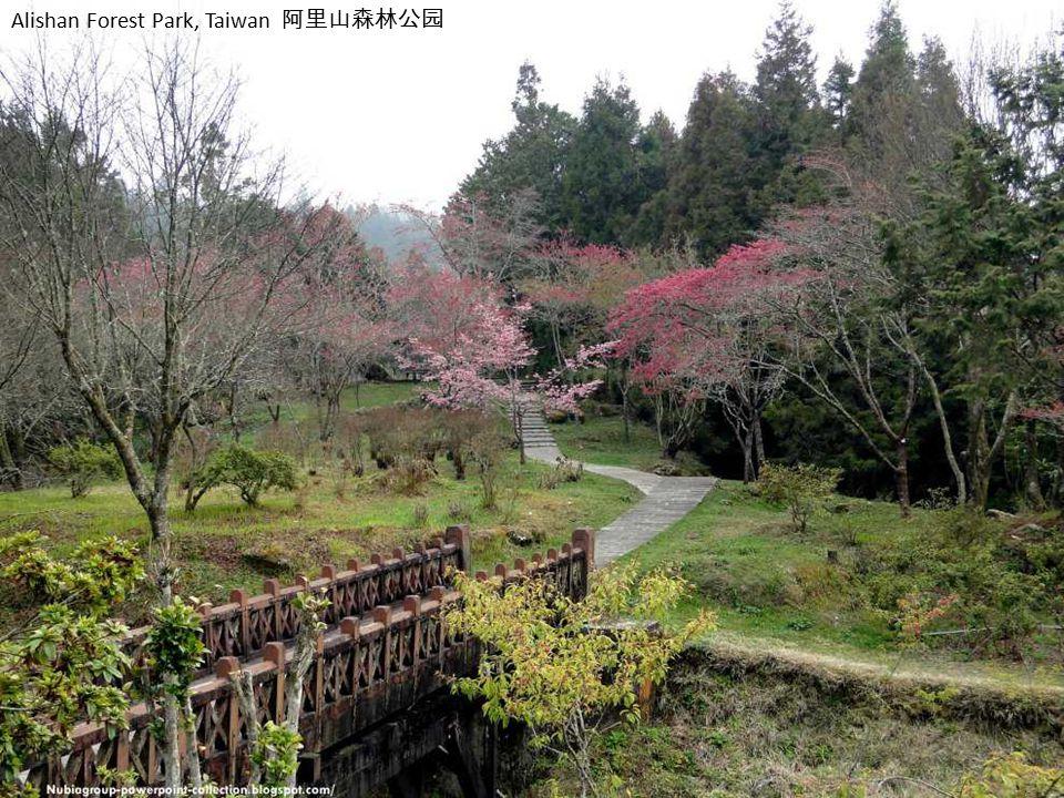 Alishan Forest Park, Taiwan 阿里山森林公园