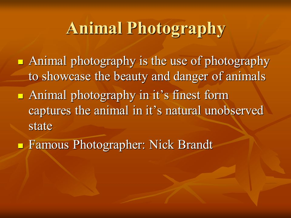 Animal Photography Animal photography is the use of photography to showcase the beauty and danger of animals.