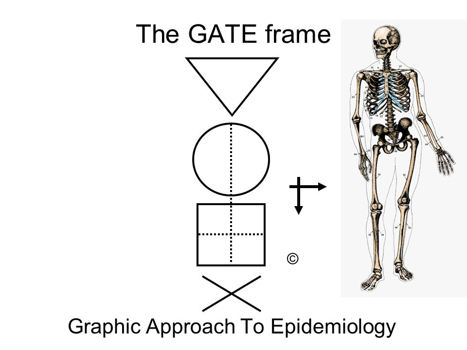 Graphic Approach To Epidemiology