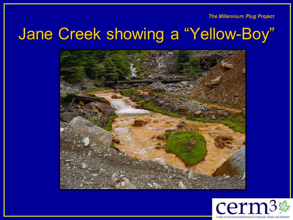 Jane Creek showing a Yellow-Boy