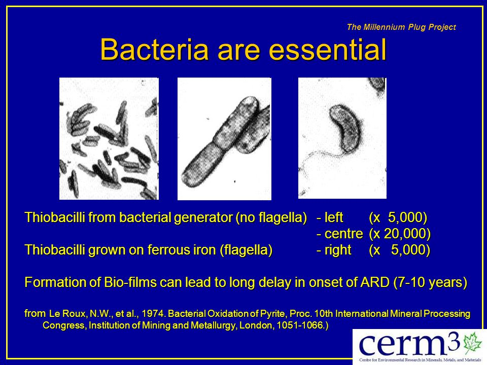 Bacteria are essential