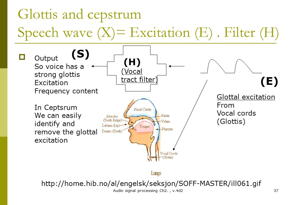 Glottis and cepstrum Speech wave (X)= Excitation (E) . Filter (H)