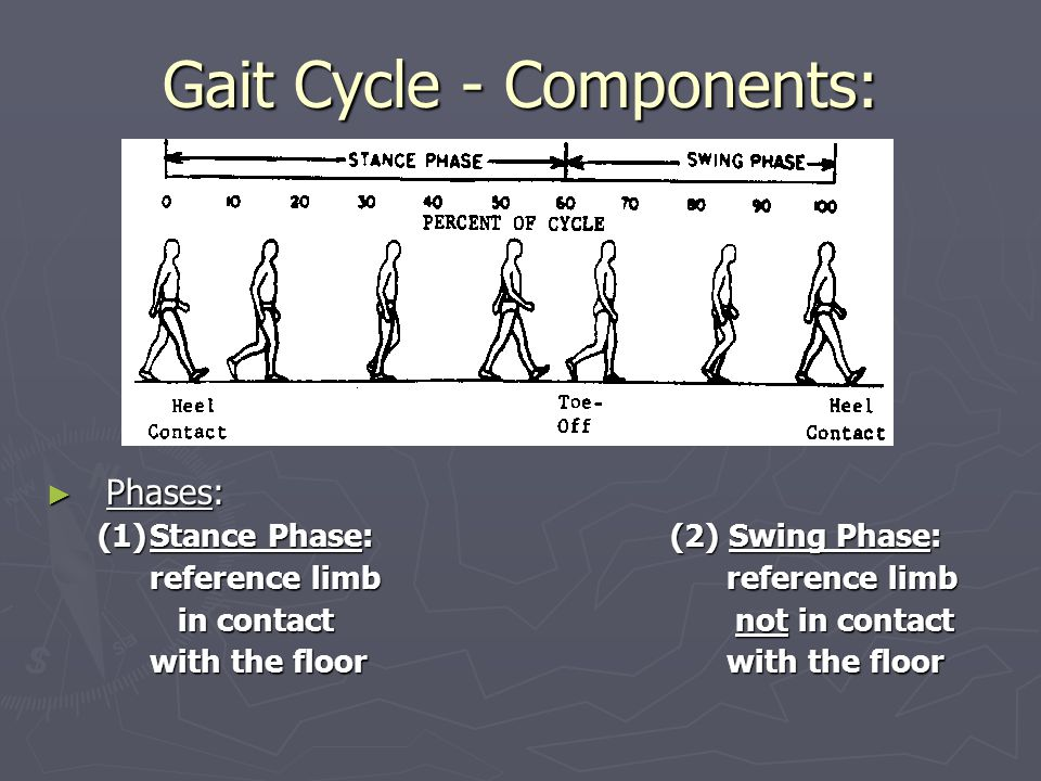 Gait Cycle - Components: