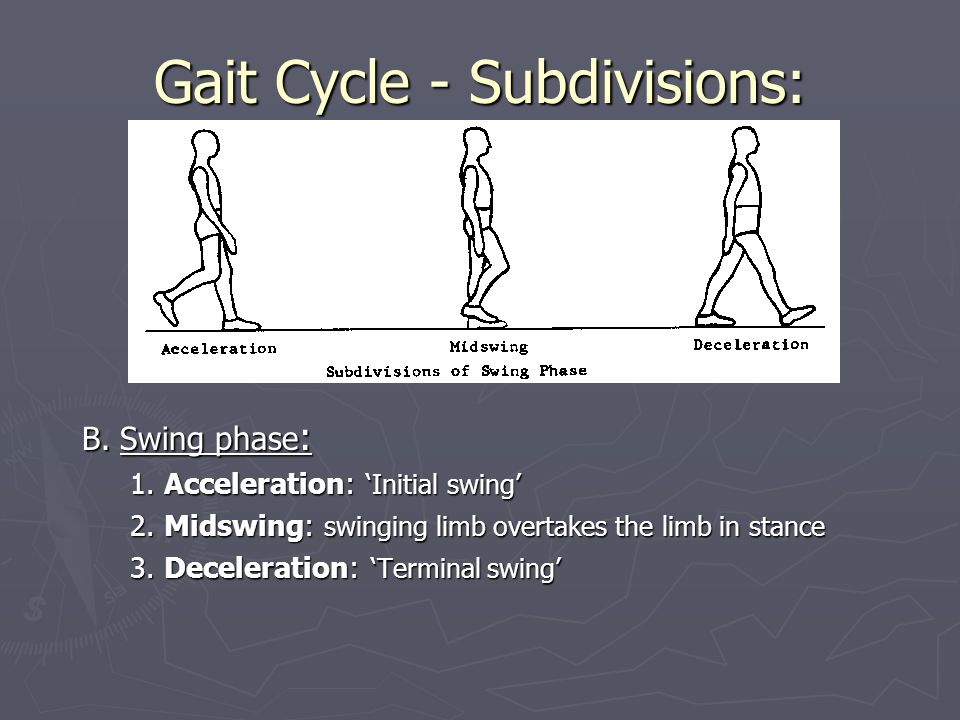 Gait Cycle - Subdivisions: