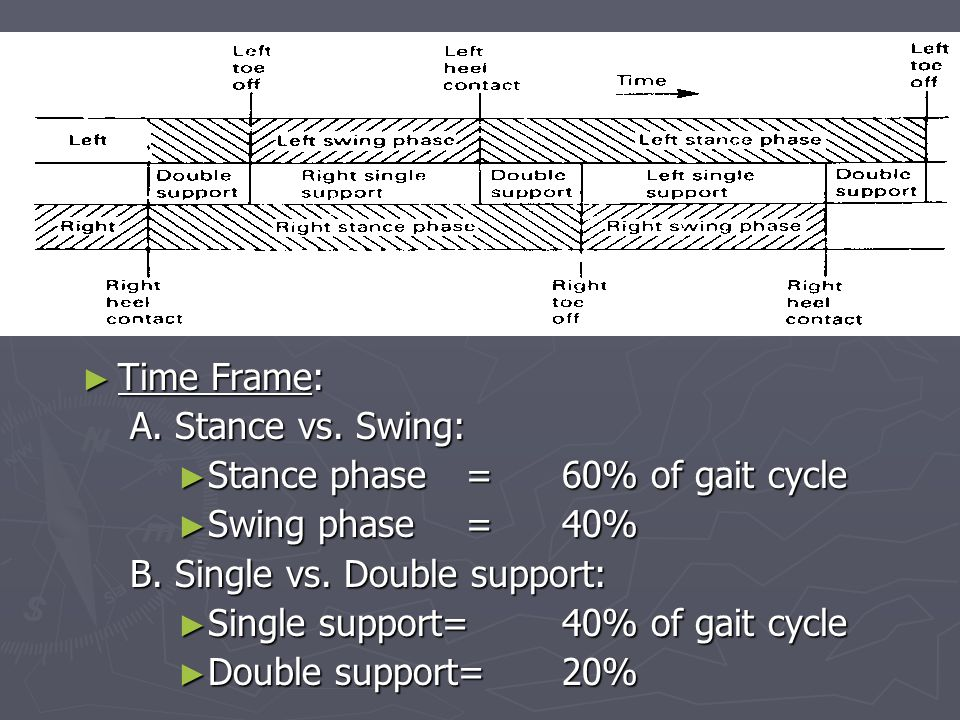 Time Frame: A. Stance vs. Swing: Stance phase = 60% of gait cycle. Swing phase = 40% B. Single vs. Double support: