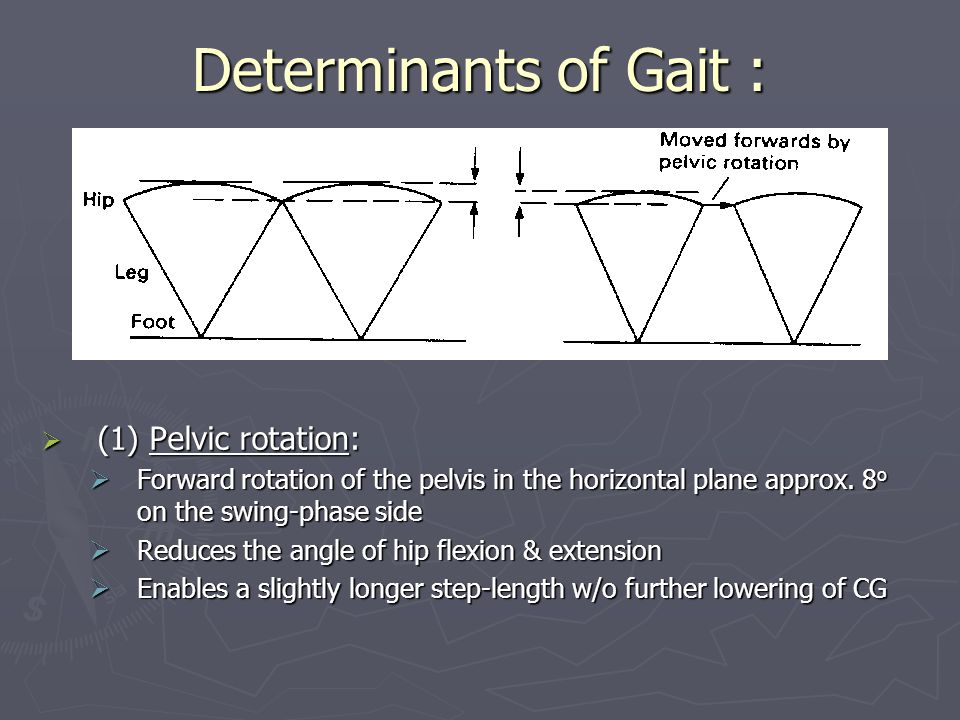 Determinants of Gait : (1) Pelvic rotation: