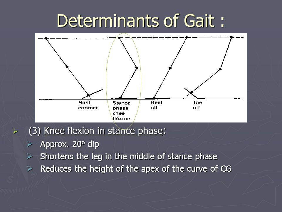 Determinants of Gait : (3) Knee flexion in stance phase: