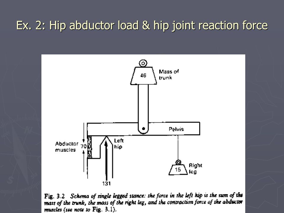 Ex. 2: Hip abductor load & hip joint reaction force