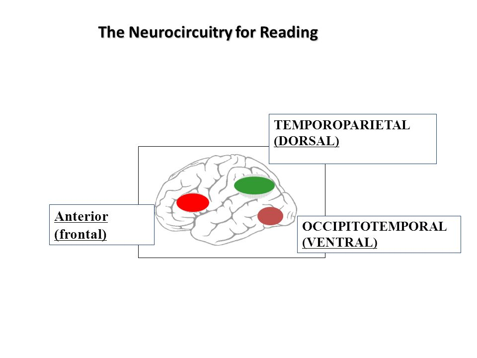 The Neurocircuitry for Reading