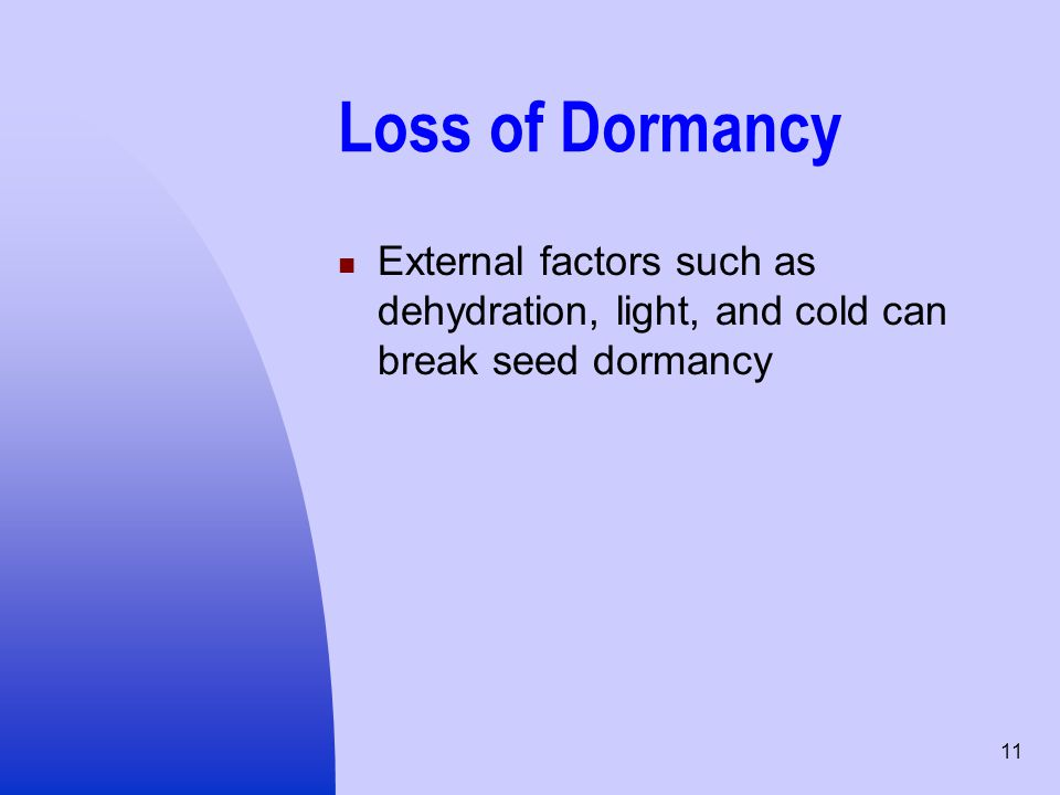 Loss of Dormancy External factors such as dehydration, light, and cold can break seed dormancy