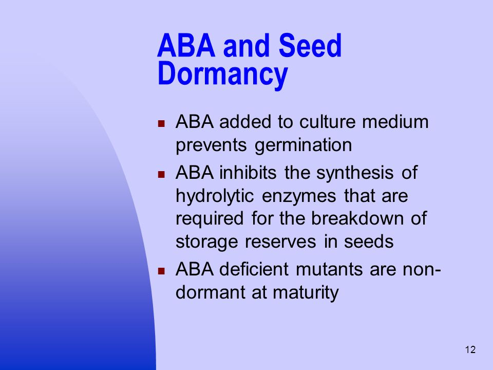 ABA and Seed Dormancy ABA added to culture medium prevents germination