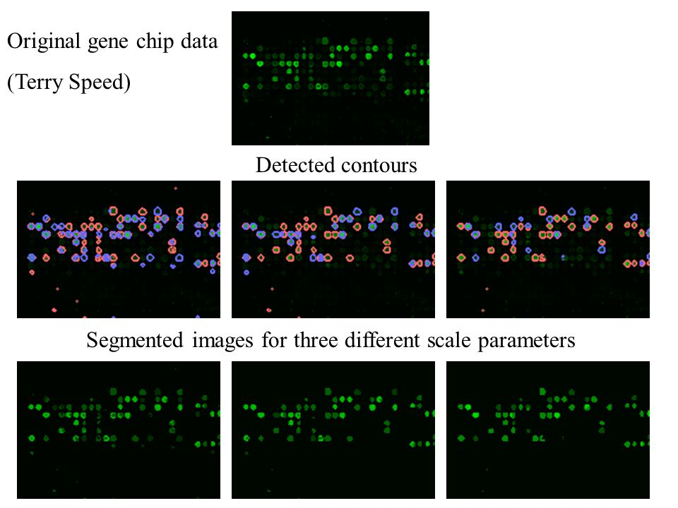 Original gene chip data