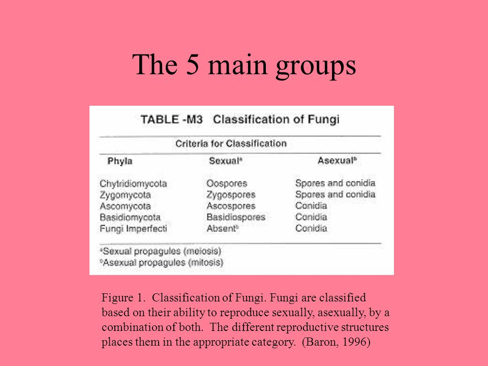 The 5 main groups