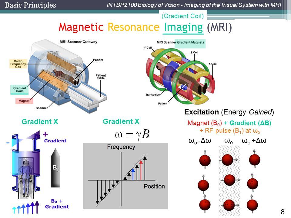 Magnet (B0) + Gradient (ΔB)