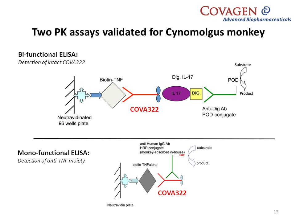 Two PK assays validated for Cynomolgus monkey