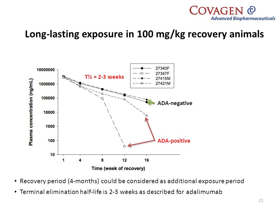 Long-lasting exposure in 100 mg/kg recovery animals