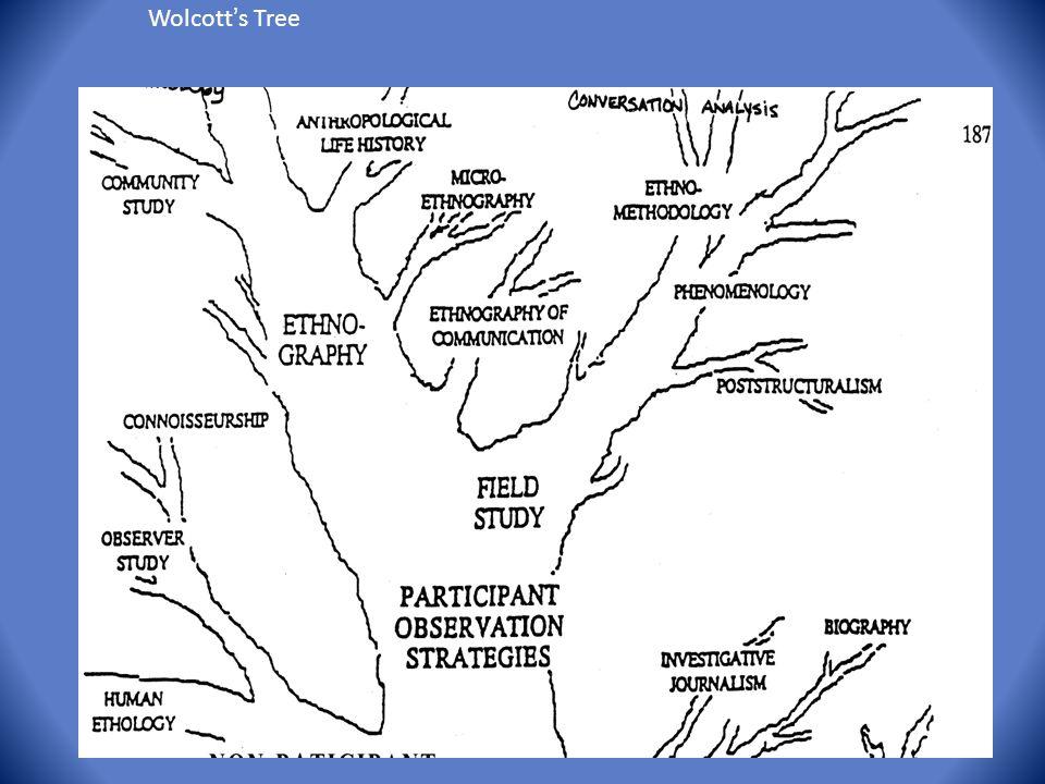 Wolcott's Tree