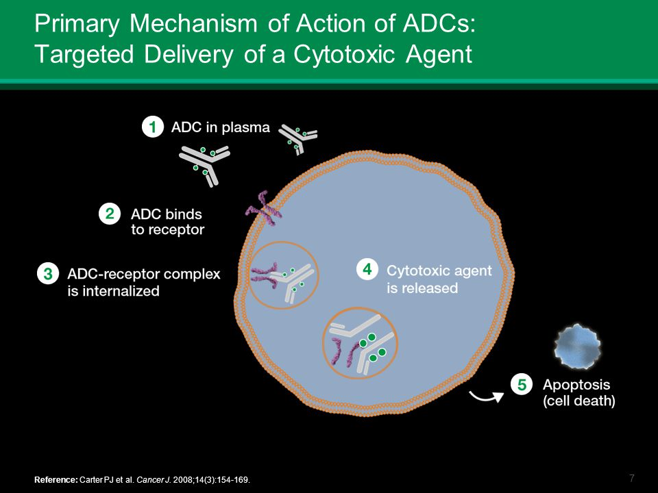 Primary Mechanism of Action of ADCs: Targeted Delivery of a Cytotoxic Agent