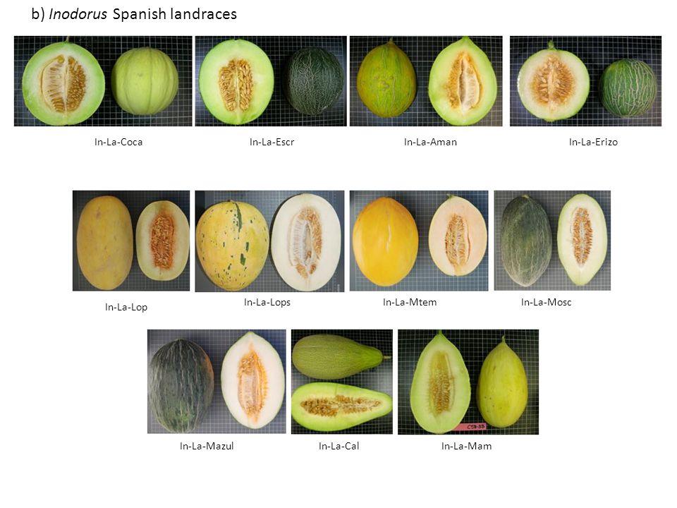 b) Inodorus Spanish landraces
