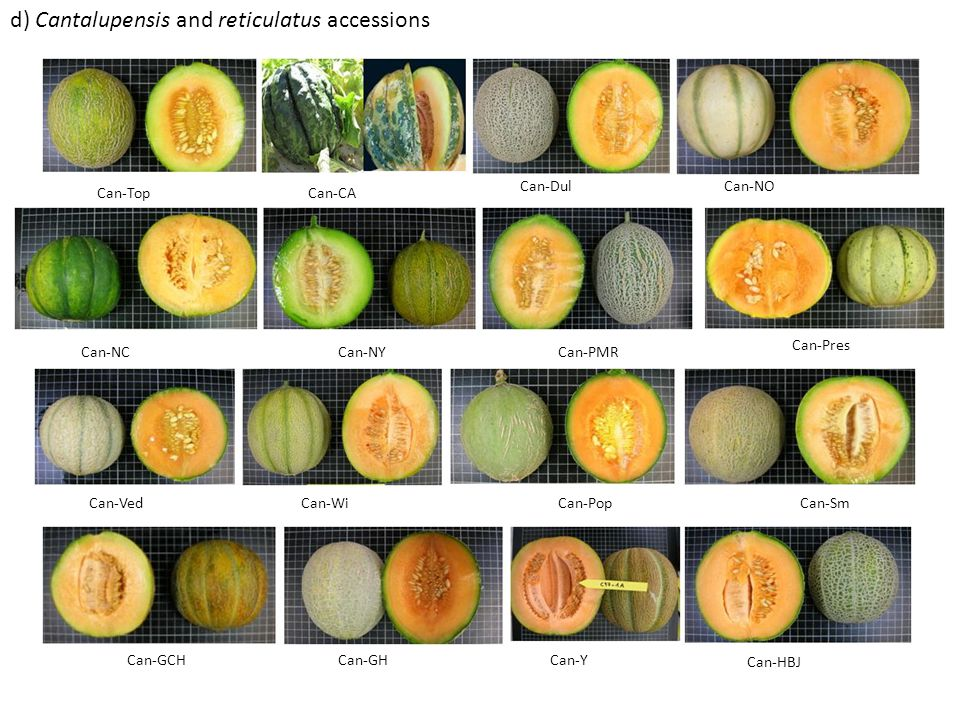 d) Cantalupensis and reticulatus accessions