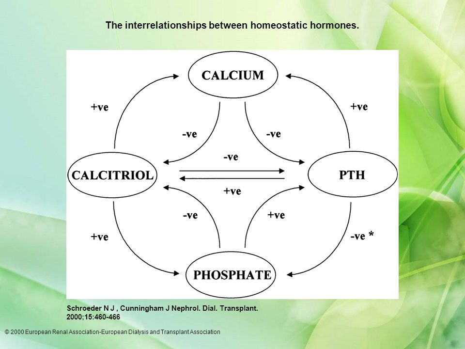 The interrelationships between homeostatic hormones.