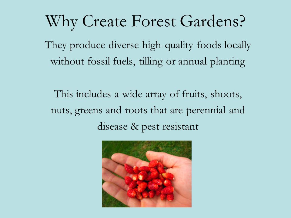 Why Create Forest Gardens