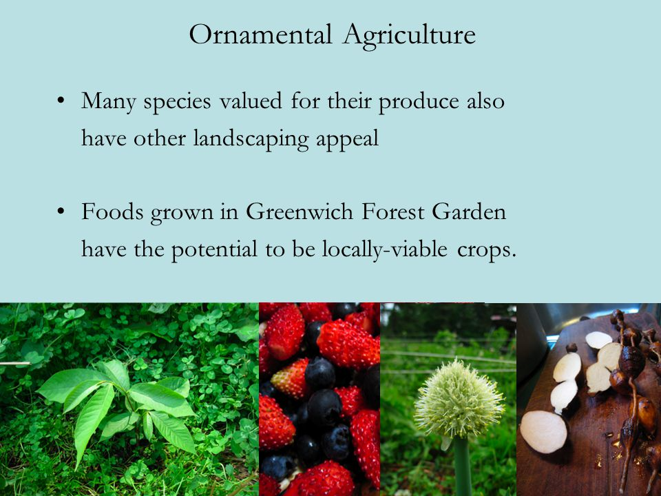 Ornamental Agriculture