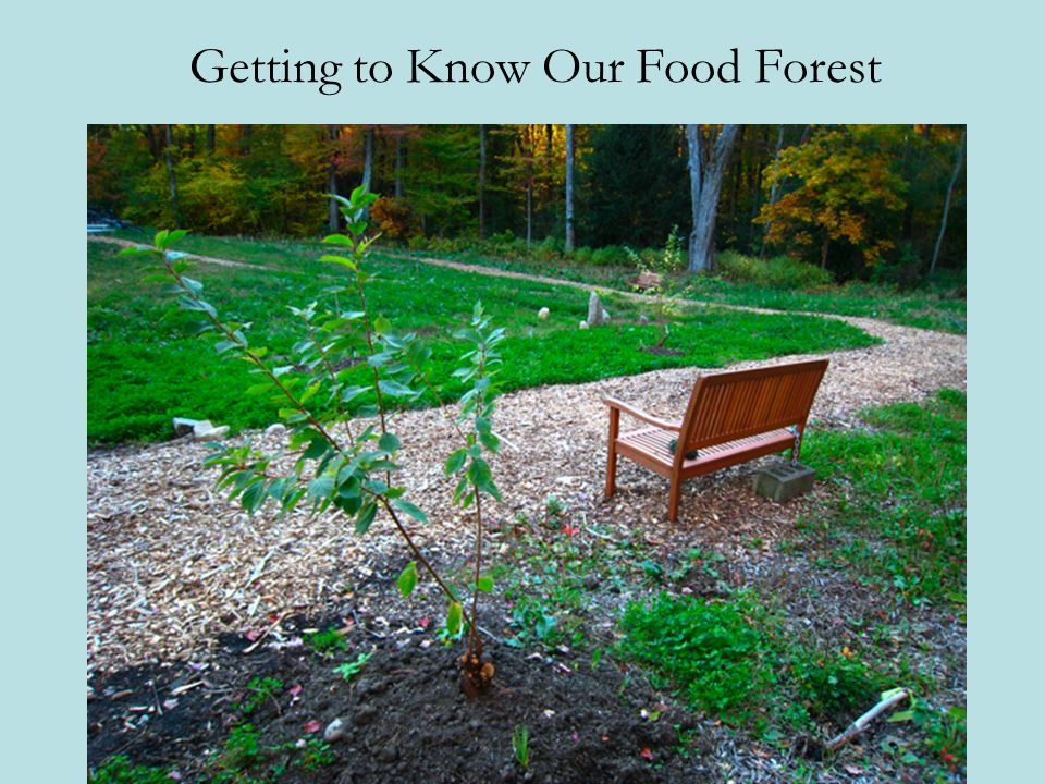 Getting to Know Our Food Forest
