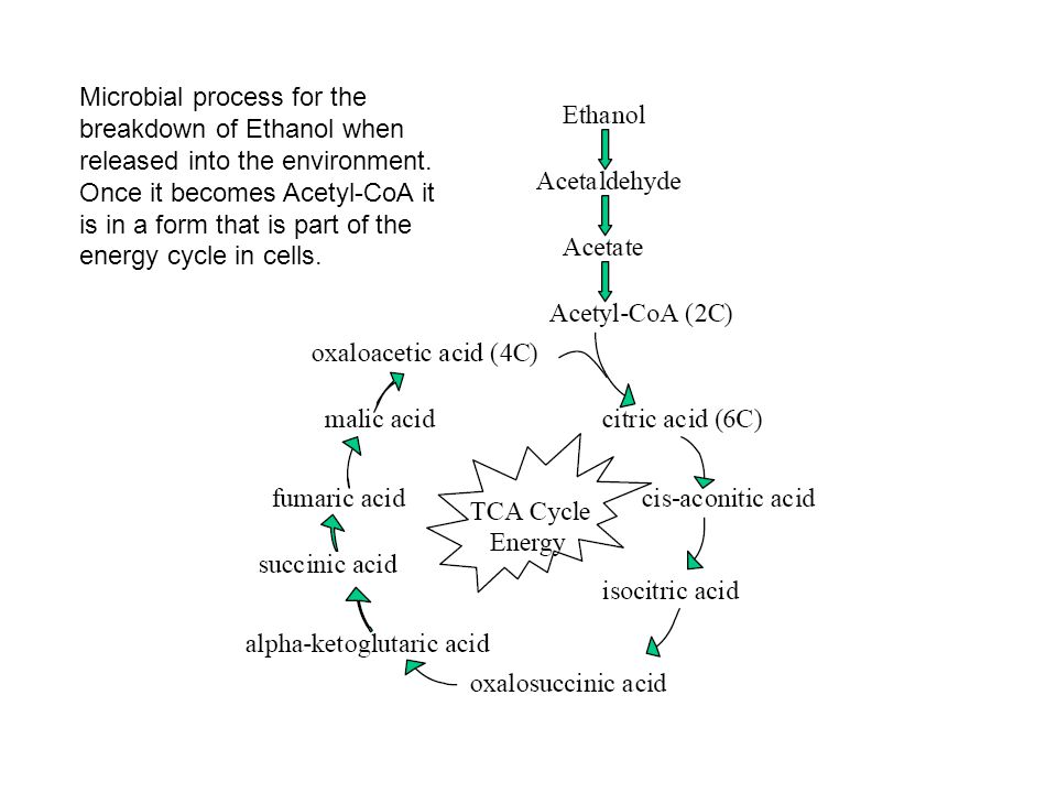 Microbial process for the breakdown of Ethanol when released into the environment.