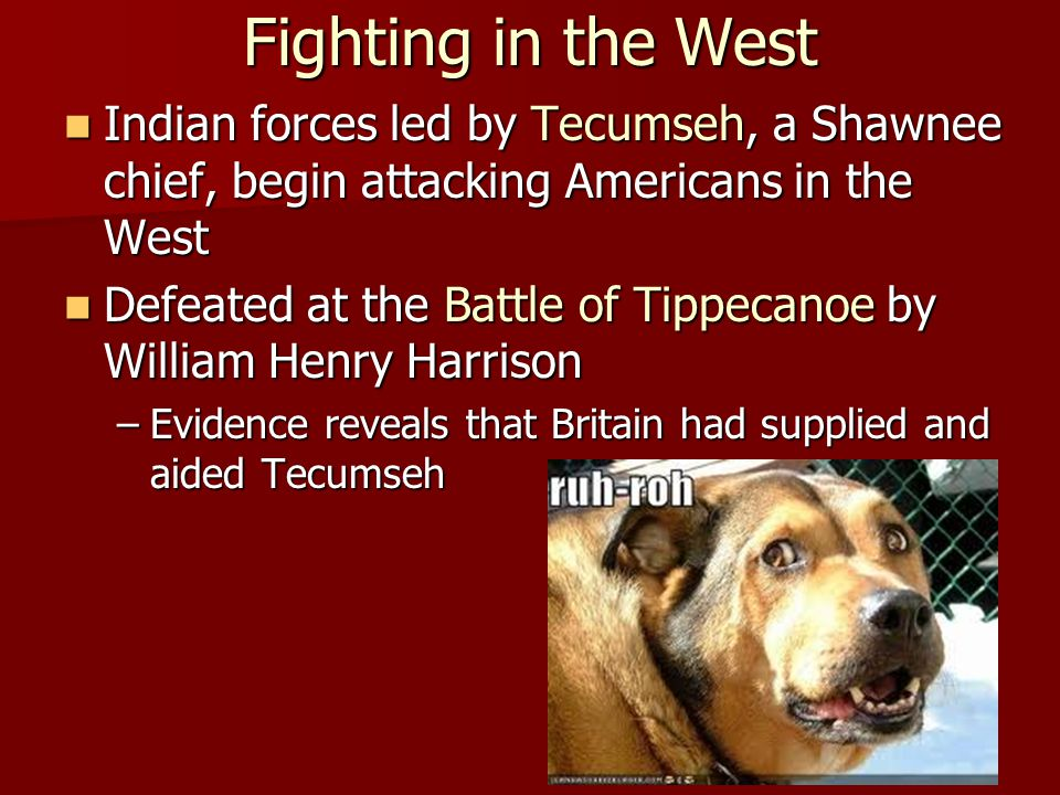 Fighting in the West Indian forces led by Tecumseh, a Shawnee chief, begin attacking Americans in the West.
