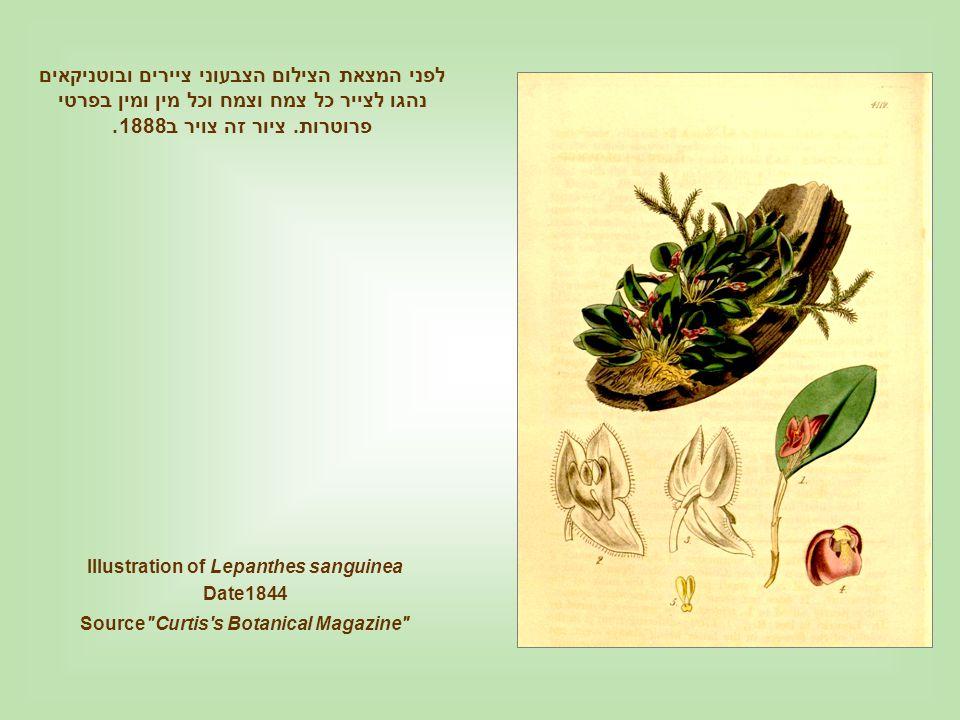 לפני המצאת הצילום הצבעוני ציירים ובוטניקאים נהגו לצייר כל צמח וצמח וכל מין ומין בפרטי פרוטרות. ציור זה צויר ב1888.