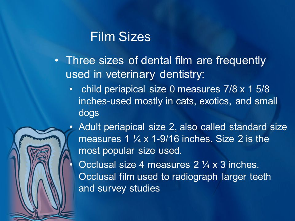 Film Sizes Three sizes of dental film are frequently used in veterinary dentistry: