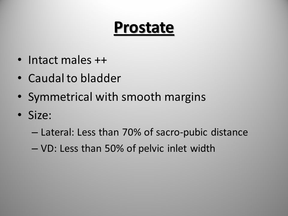 Prostate Intact males ++ Caudal to bladder