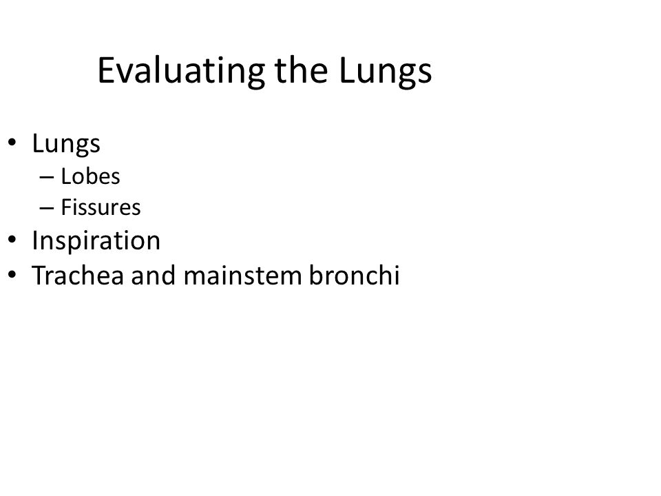 Evaluating the Lungs Lungs Inspiration Trachea and mainstem bronchi