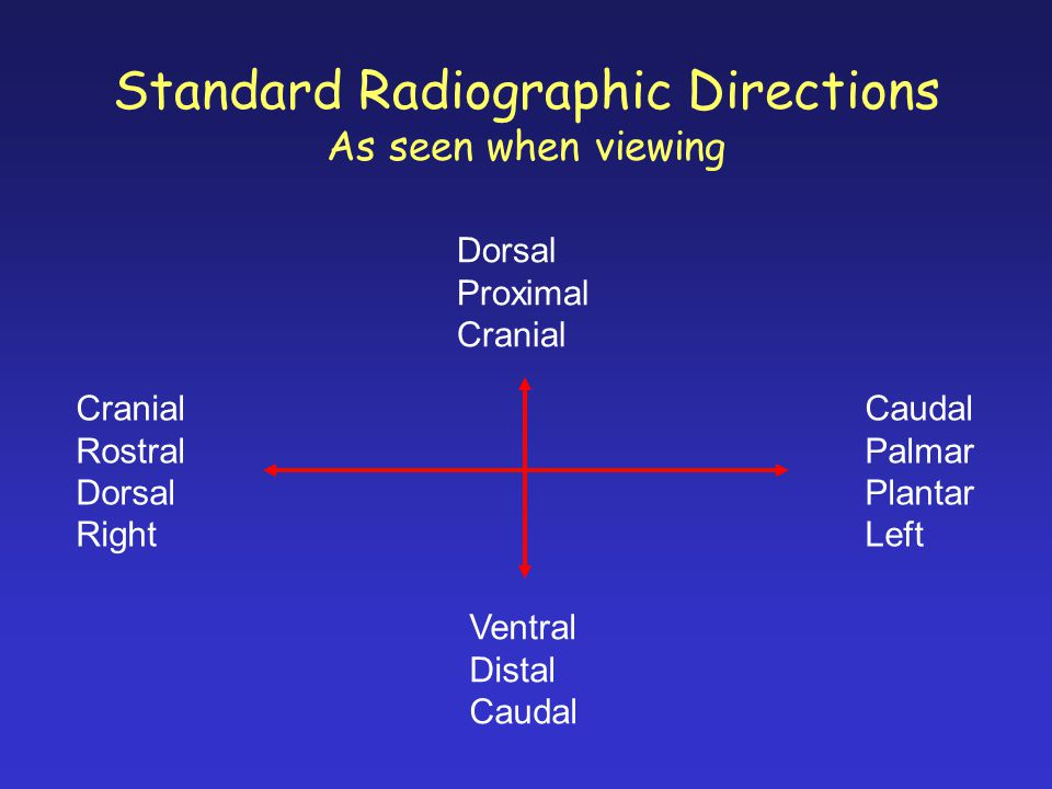 Standard Radiographic Directions As seen when viewing