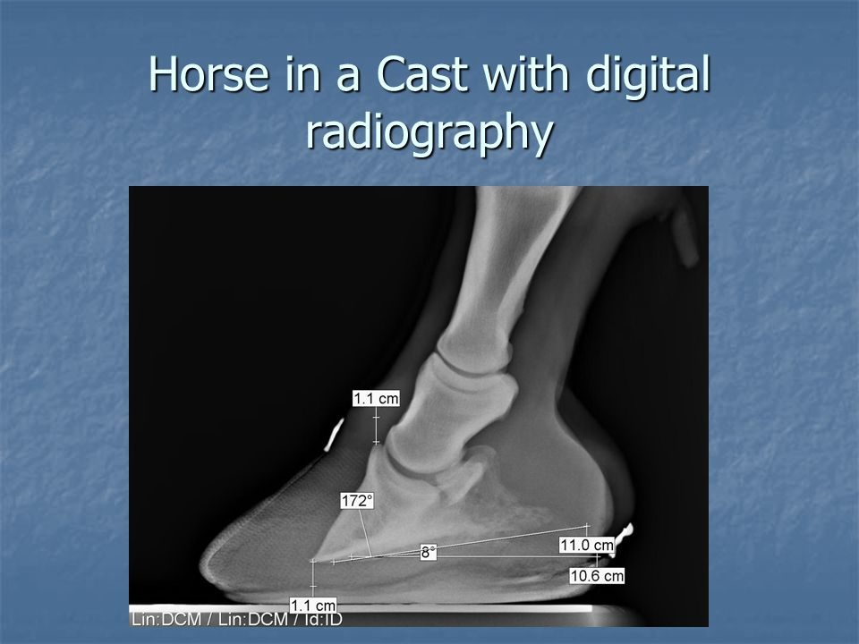 Horse in a Cast with digital radiography
