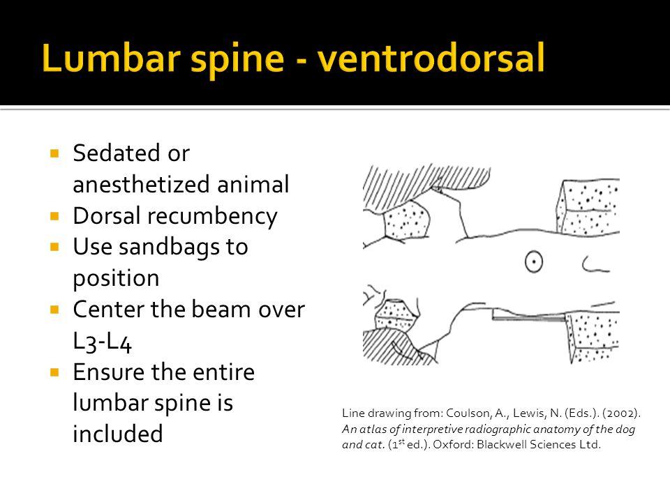 Lumbar spine - ventrodorsal