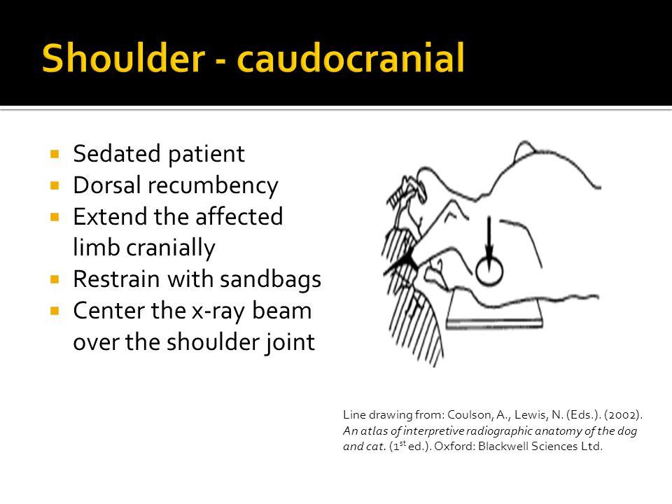 Shoulder - caudocranial