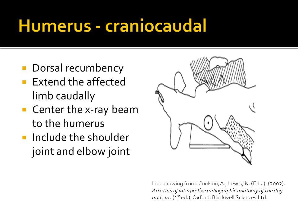 Humerus - craniocaudal