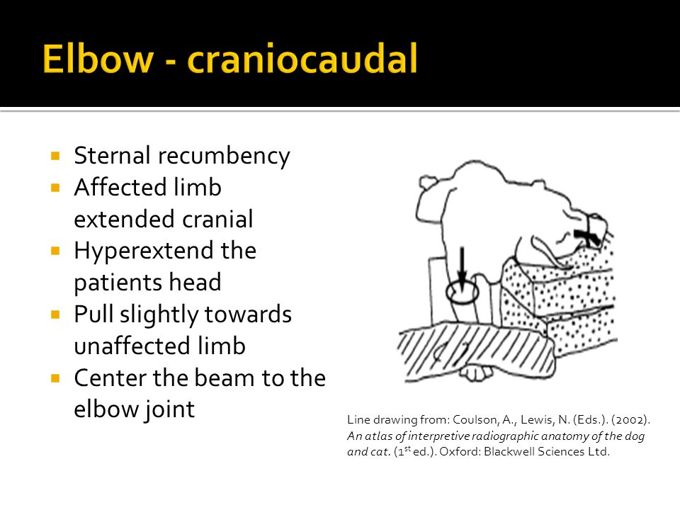 Elbow - craniocaudal Sternal recumbency Affected limb extended cranial