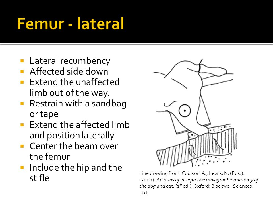Femur - lateral Lateral recumbency Affected side down