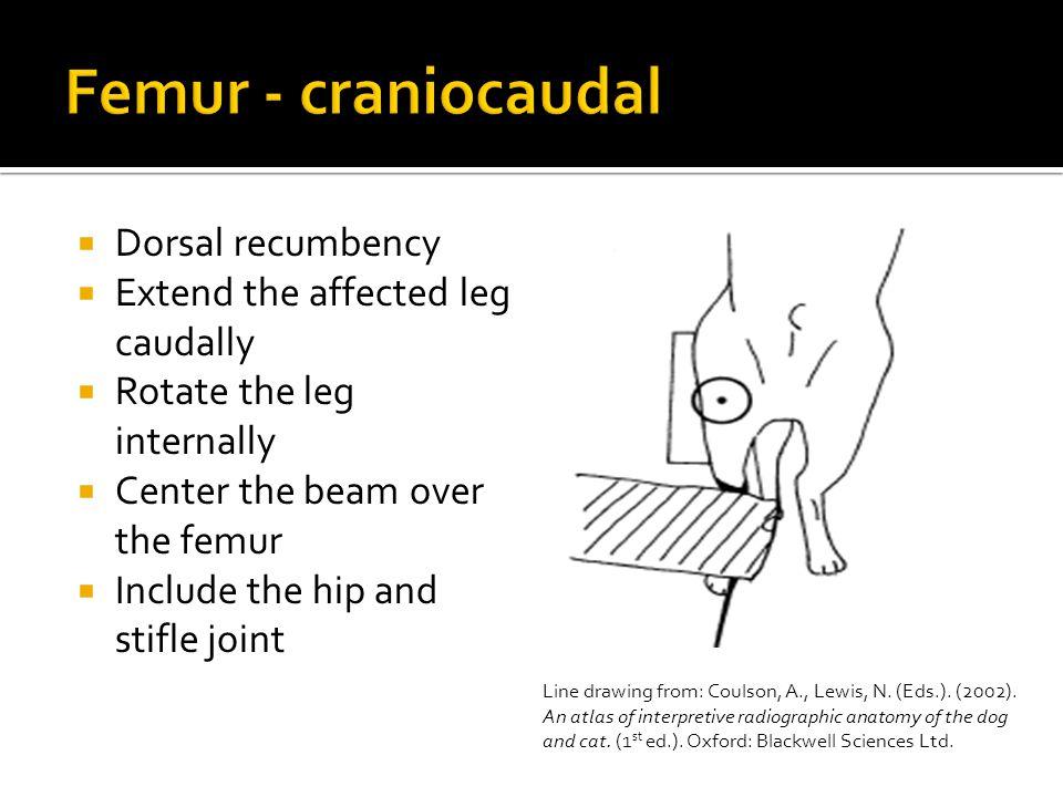 Femur - craniocaudal Dorsal recumbency