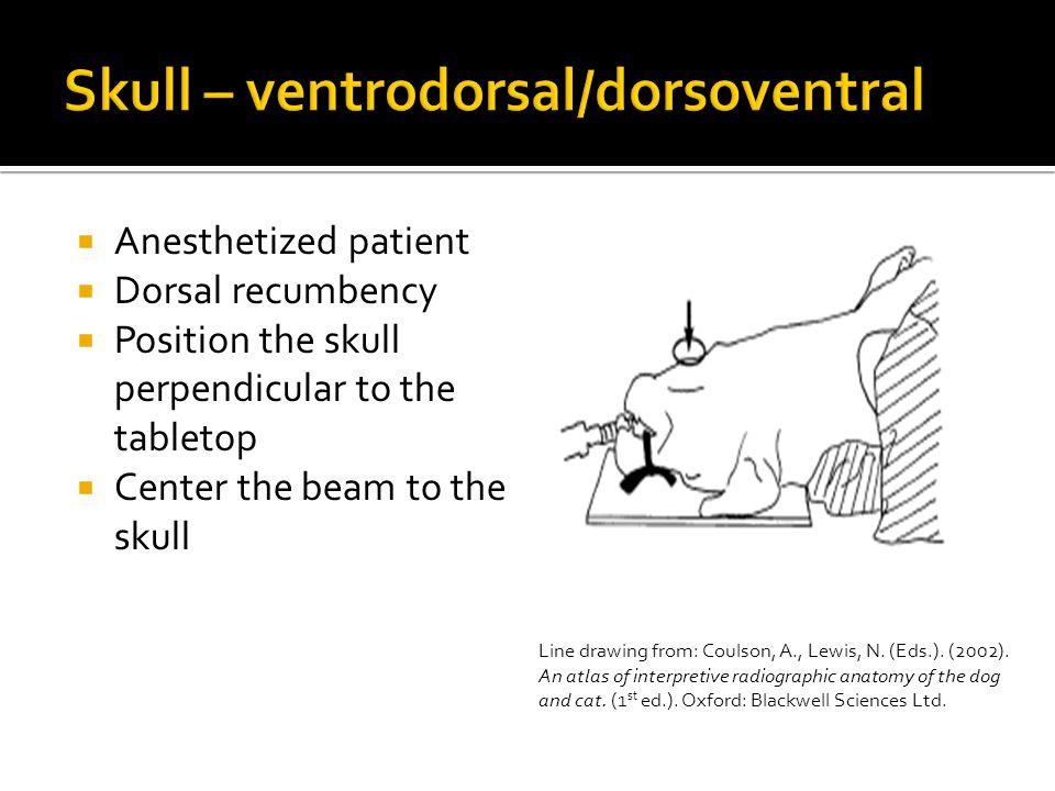 Skull – ventrodorsal/dorsoventral