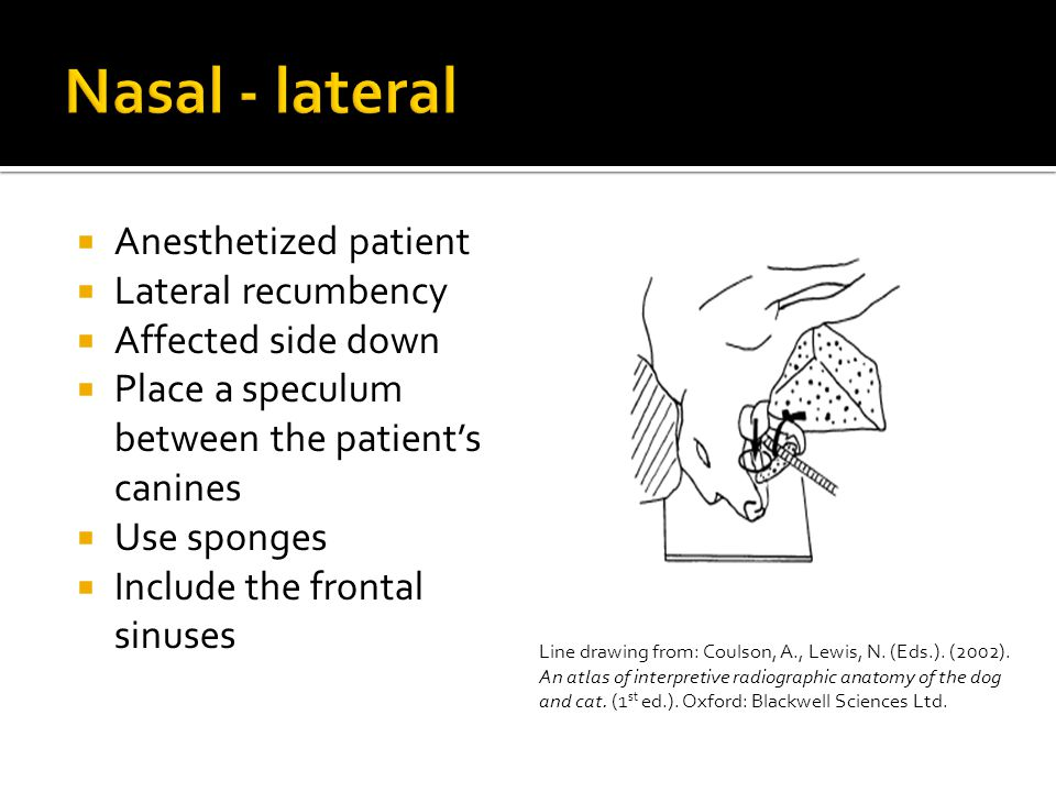 Nasal - lateral Anesthetized patient Lateral recumbency