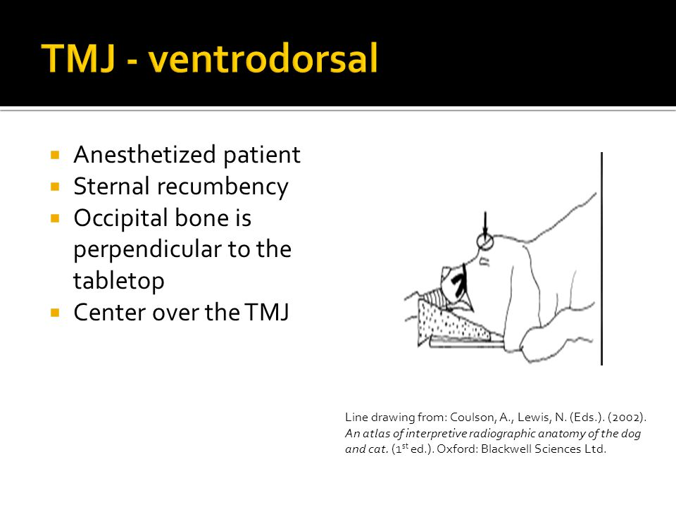 TMJ - ventrodorsal Anesthetized patient Sternal recumbency