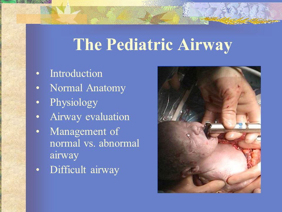 The Pediatric Airway Introduction Normal Anatomy Physiology