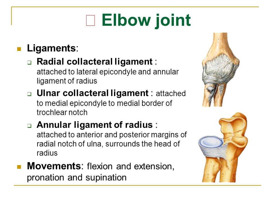★ Elbow joint Ligaments: