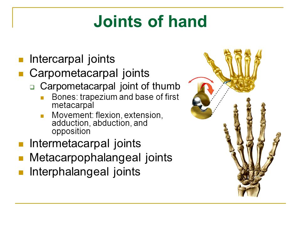 Joints of hand Intercarpal joints Carpometacarpal joints