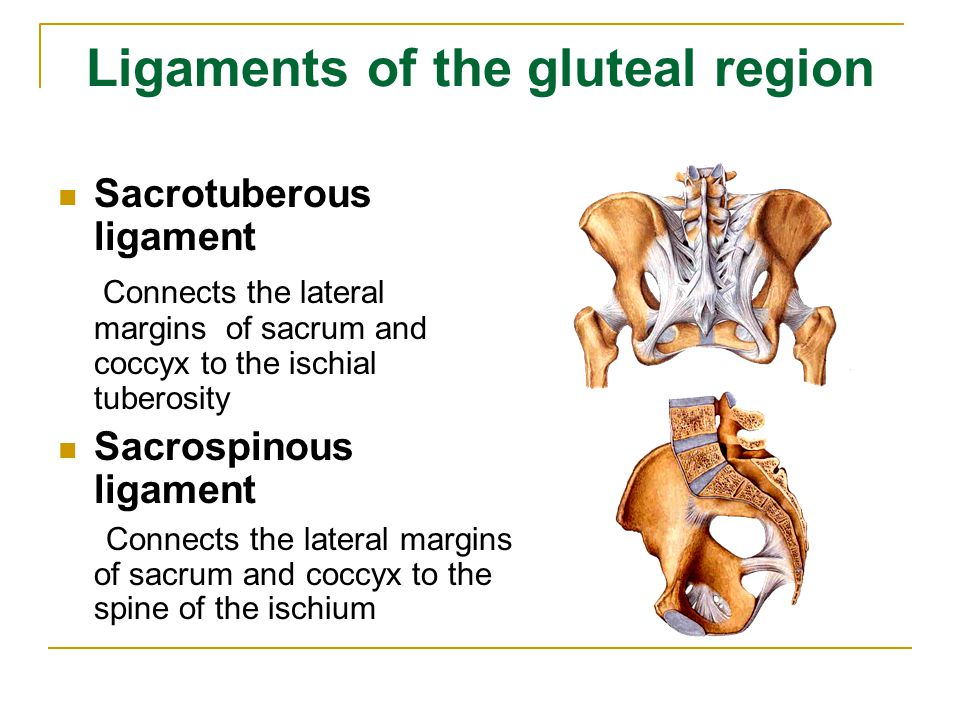 Ligaments of the gluteal region